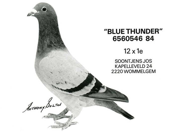 soontjens_blue_thunder